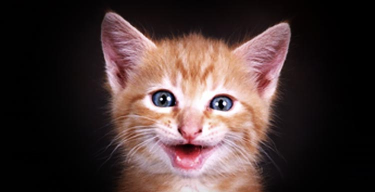 Kitty Cat Laughing